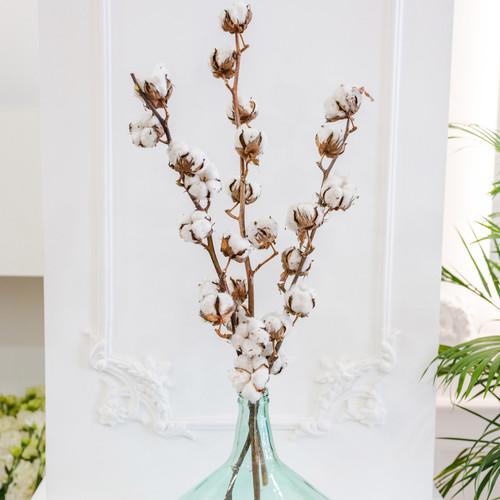 Fleurs de coton séchées naturelles