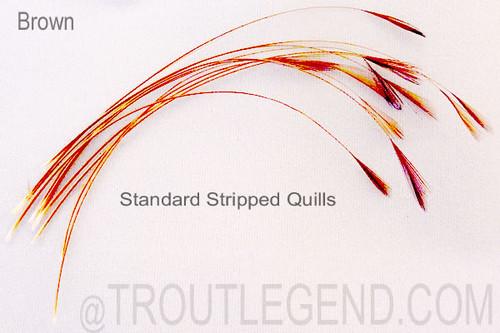 Standard Stripped Quills