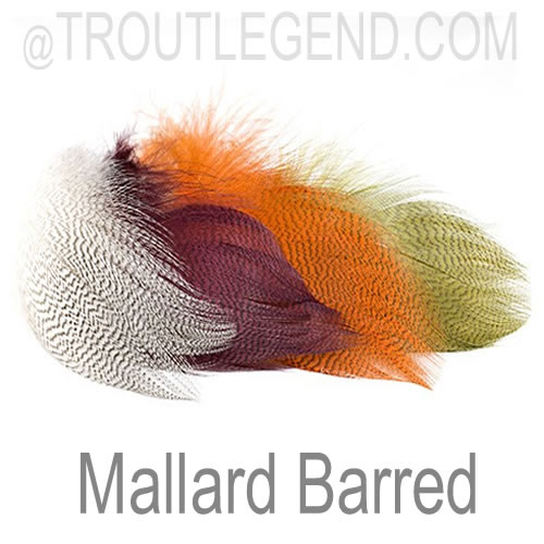Mallard Barred Feathers