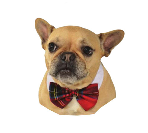 Christmas Pet Costume Red Bowtie