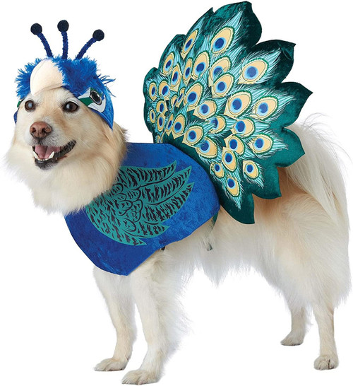 California Costumes Collections PET20165 Pretty As A Peacock Dog Costume