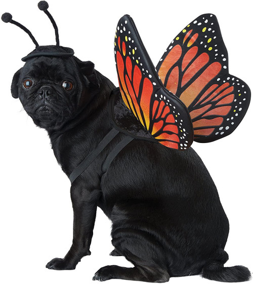 California Costume Collections PET20164 Monarch Butterfly Dog Costume