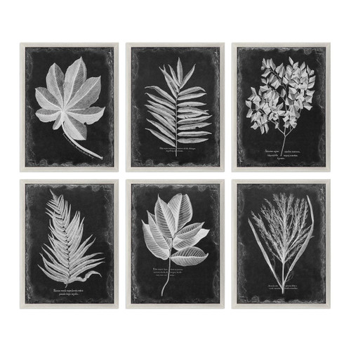 Framed Botanical Prints - Set