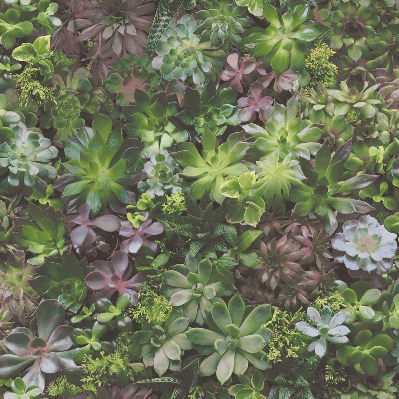 Evergreen Foliage Green Lilac Galerie Wallpaper 7322