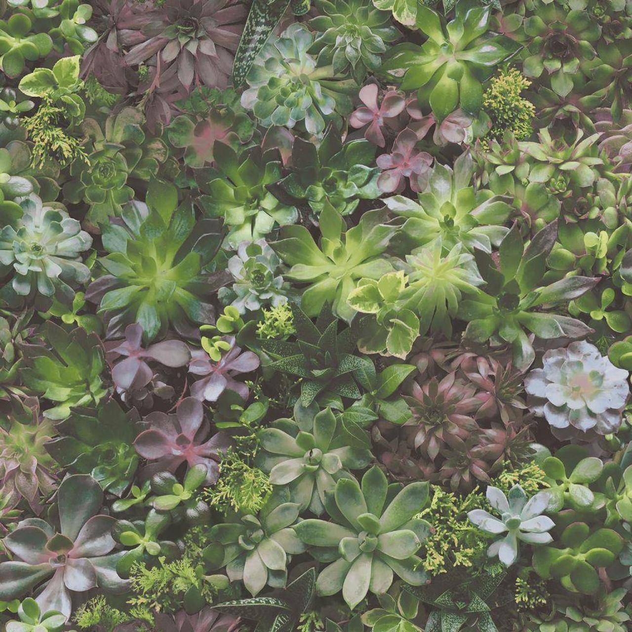 Galerie Evergreen Succulents Wallpaper 7322 Green Lilac