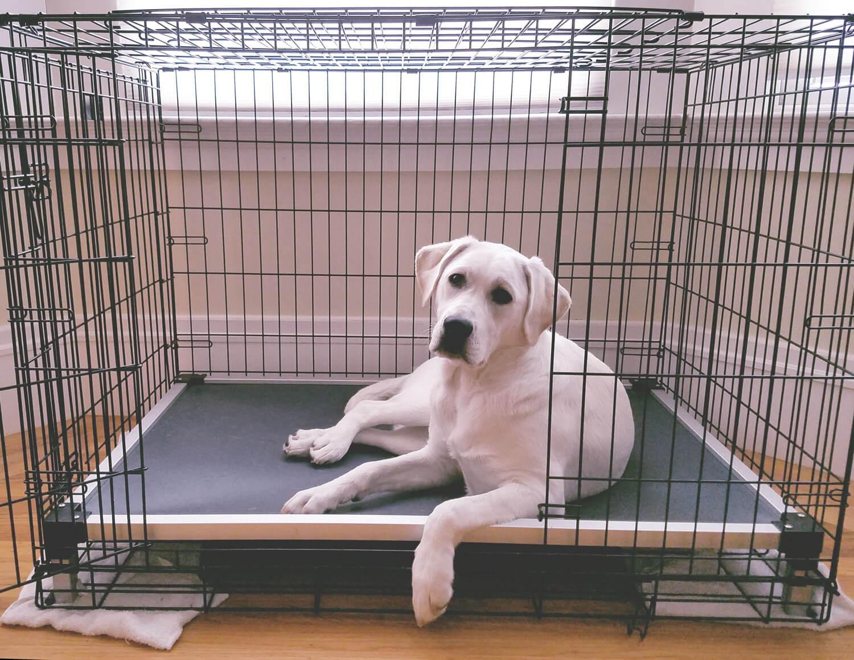 Slimline Crate Bed Kuranda Dog Beds