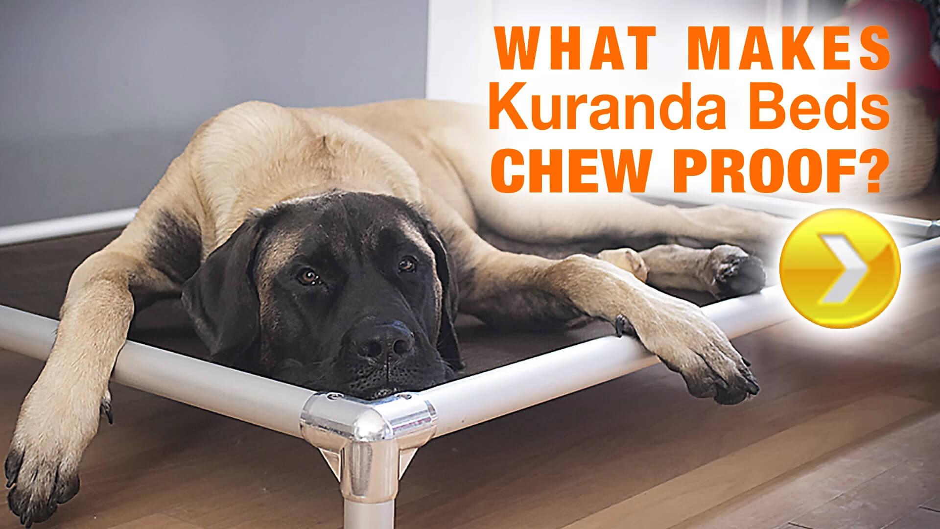 5 Benefits Of An Elevated Dog Bed Blog Kuranda Dog Beds