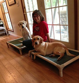 Rachel Thorton on Diabetic Alert Dogs