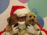Dogs at Orphans of the Storm No Kill Animal Shelter comfortable for Christmas