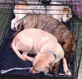 Holmes County dogs soon to have their own beds!