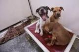 SPCA Flin Fon, Manitoba Canada dogs and cats start the year with new Kuranda beds!