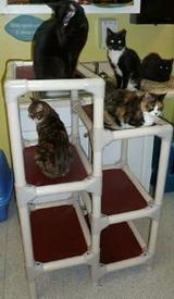 Dawson County Humane Society kitties have fun!