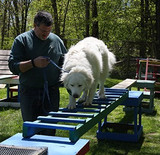 Dog Trainer Vince Rambala