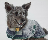 Dog Safety in Cold Weather