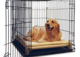 Stopping Your Dog's Destructive Behavior While You Are Away