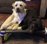 Reducing Chaos in a Multi-Dog Household