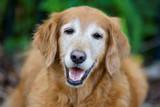 Helping Your Senior Dog Sleep Better