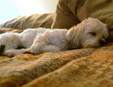 Should Your Dog Sleep on Your Bed?