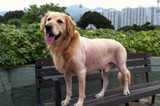 4 Summer Dog Grooming FAQs