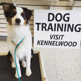 How to Talk to Your Newly Trained Dog