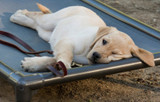 Puppy Socialization Do's and Don'ts