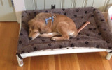 How Much Wiggle Room Does Your Dog Need on a Bed? A Guide to Picking the Right Dog Bed Size