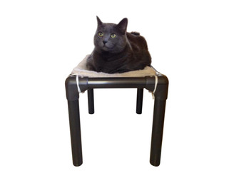 Walnut Cat Bed