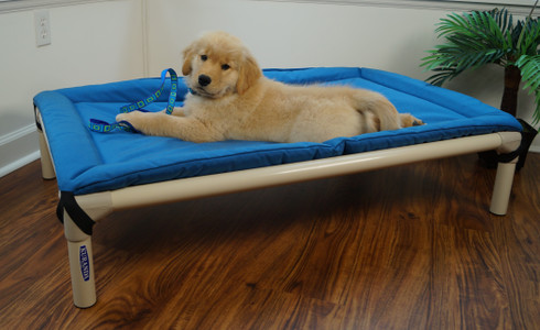 Cooper pictured with Sea Glass Lupine Collar & Leash on the Royal Blue Canvas Bed Pad