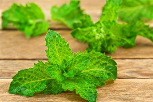 Peppermint is frequently used in aromatherapy, body care products, hair care, and cold process and melt and pour soap making.