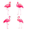 Flamingos Removable Wall Decal (set of 4)
