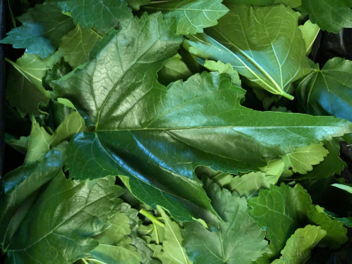 Fresh Mulberry Leaves