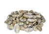 Olive Seashells
