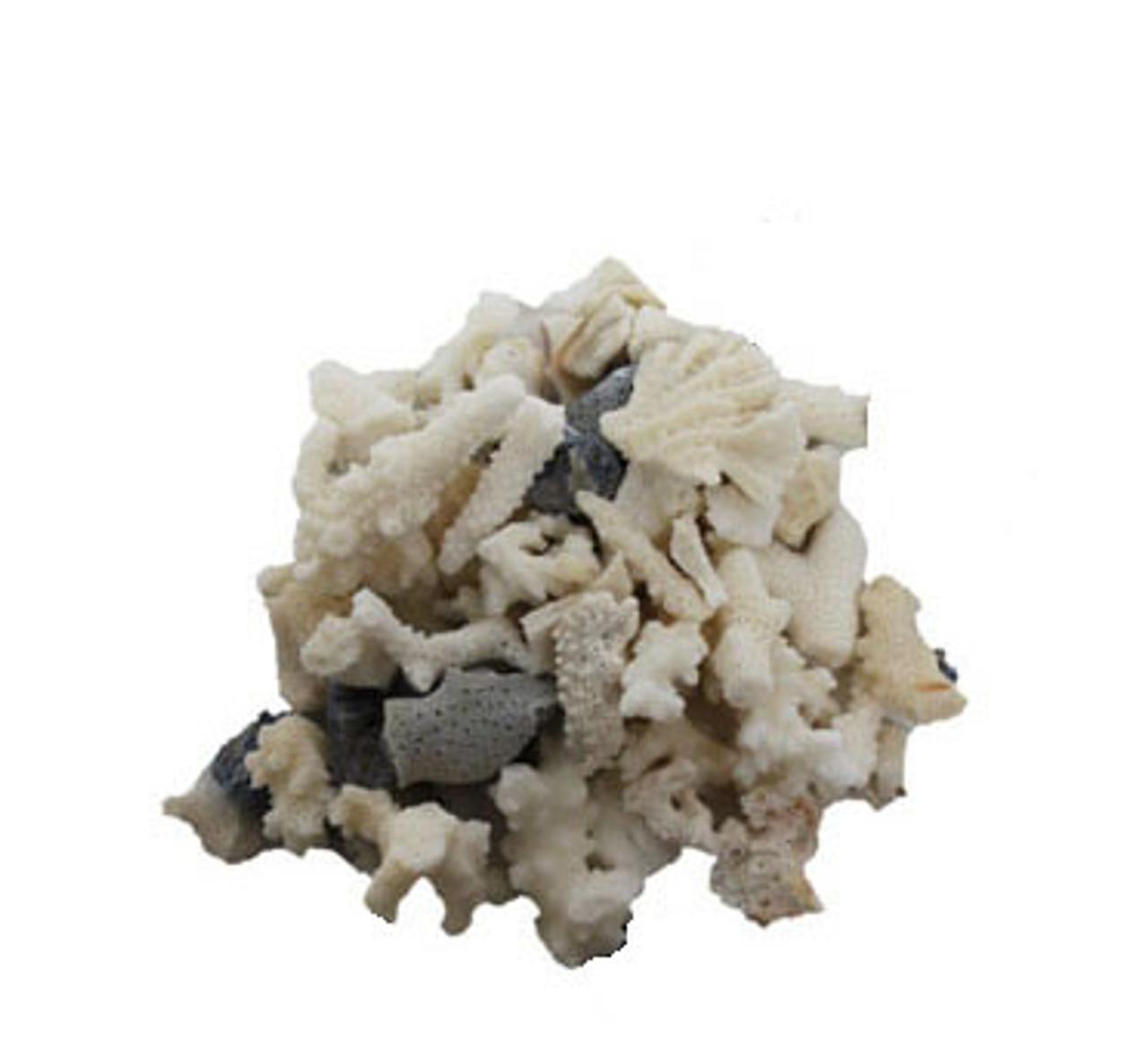 Coral Pieces Bulk