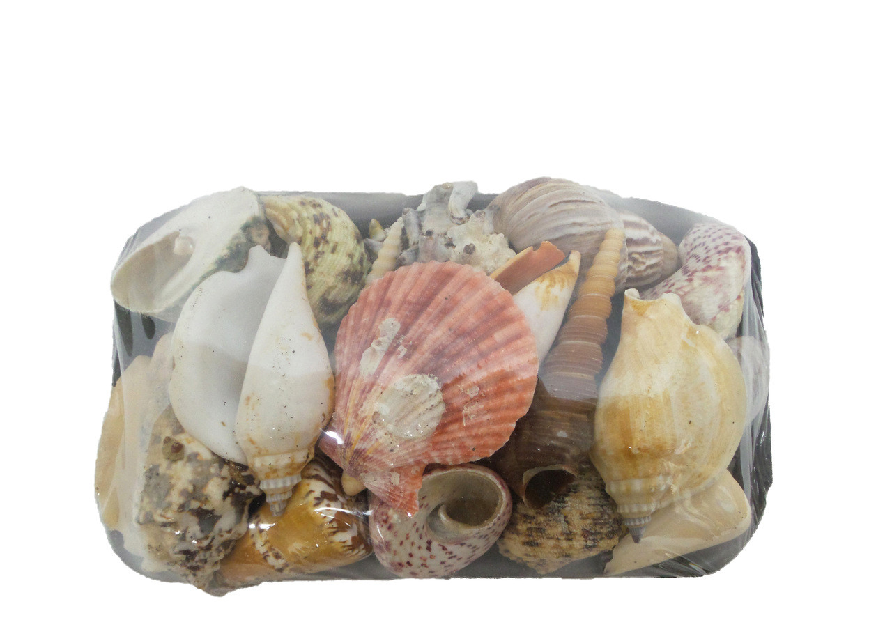 17-S  Seashell Pack