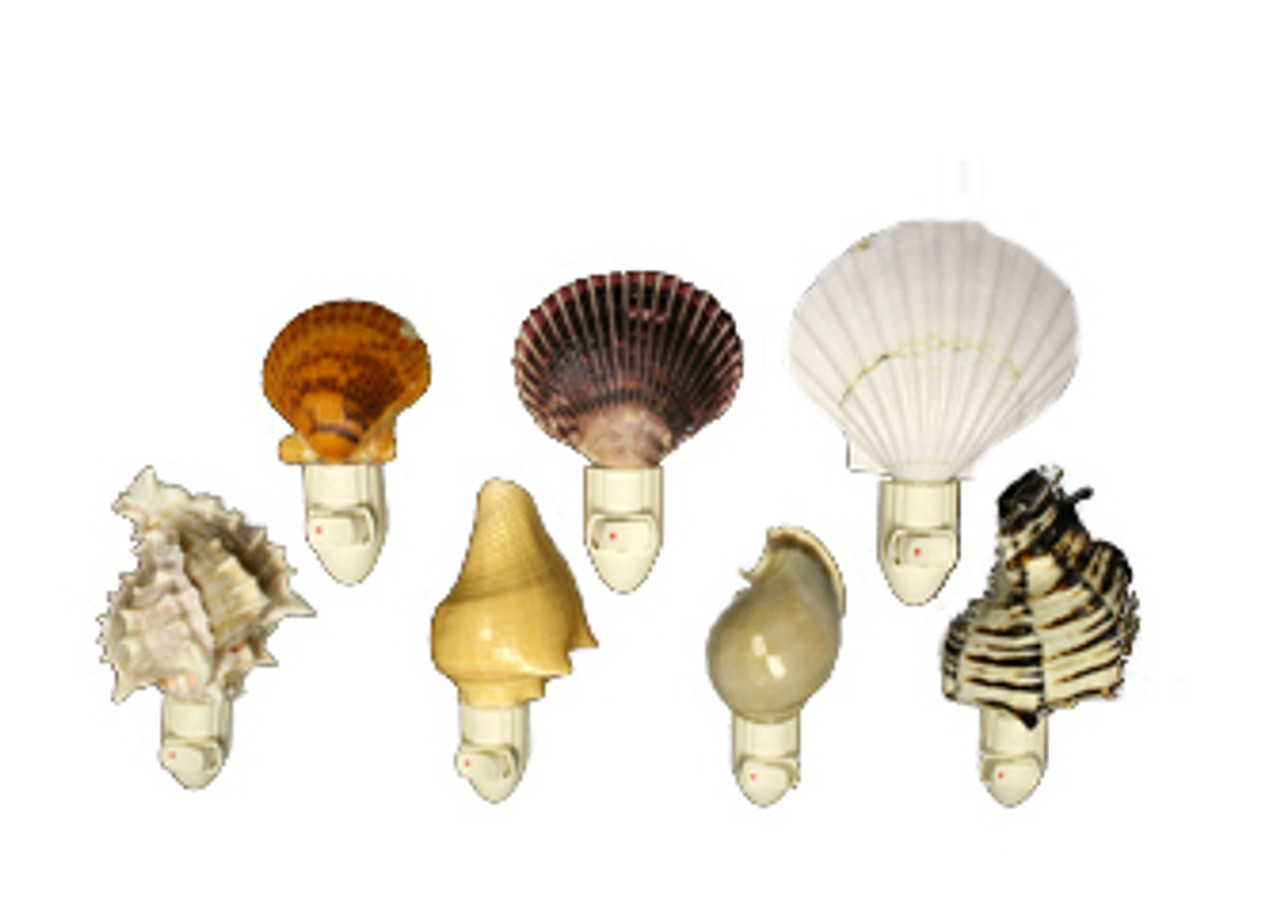Assorted Seashells Night Lights