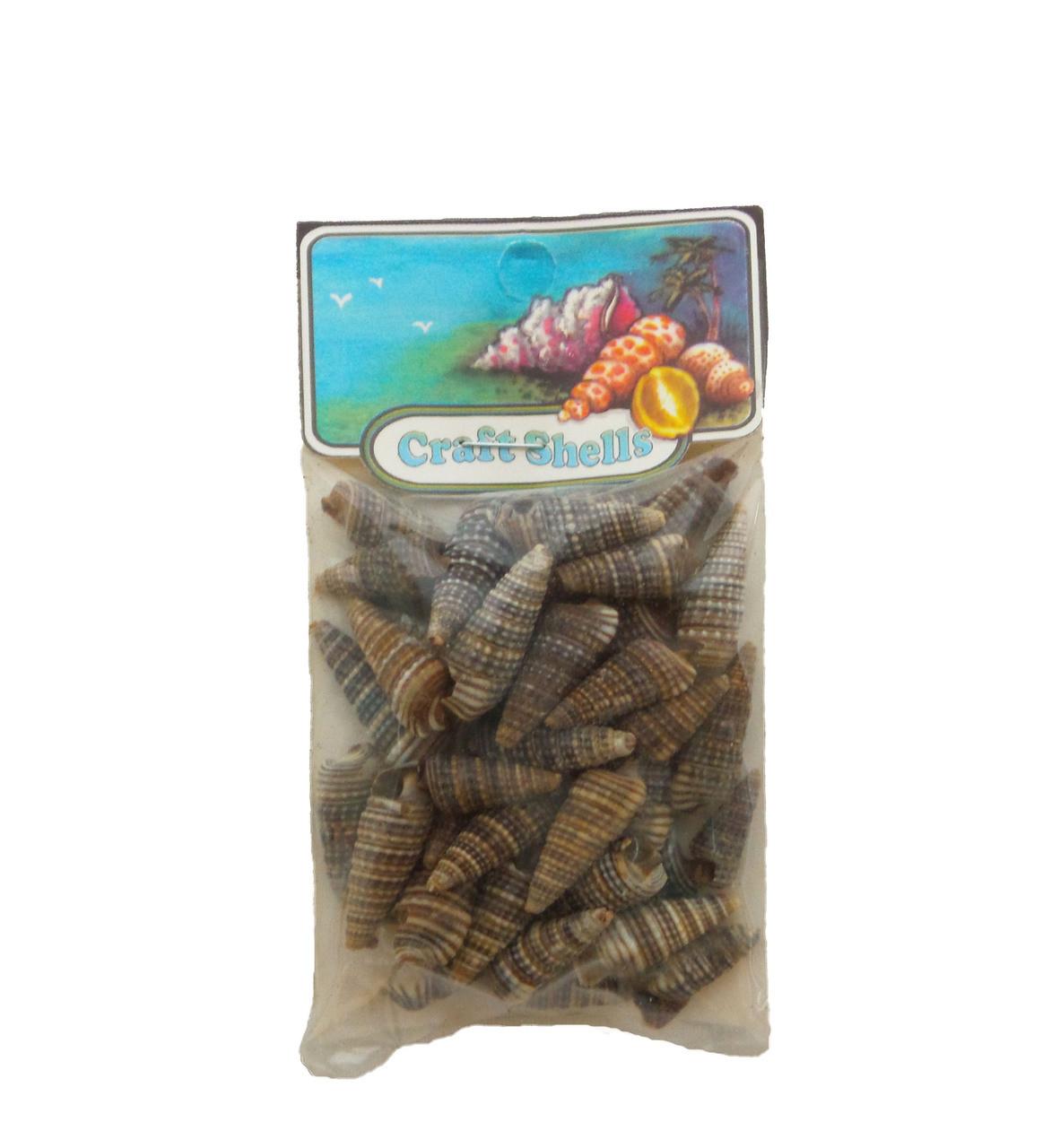 Brown Augers Seashells
