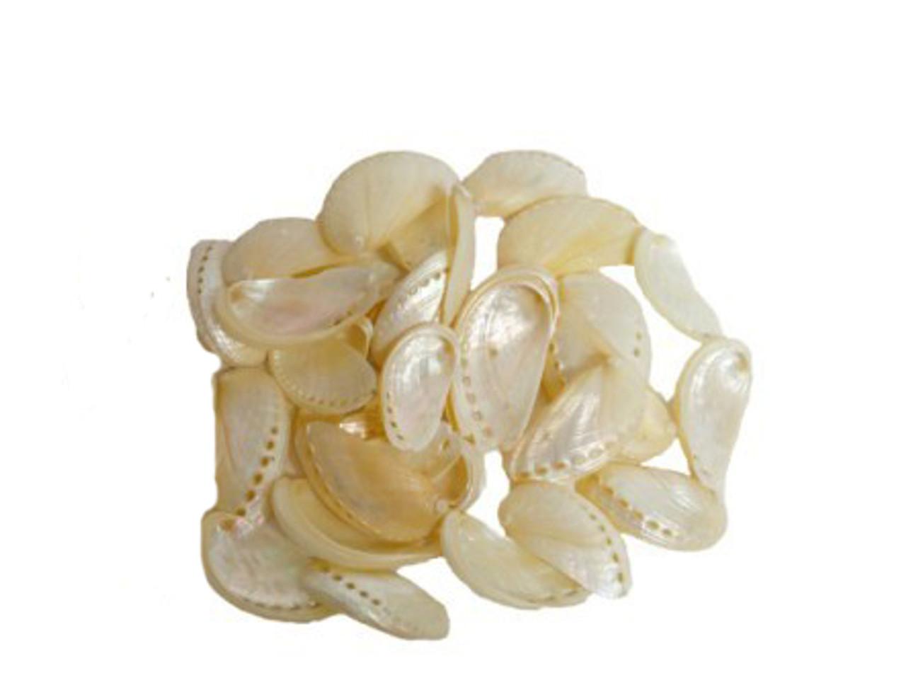 Pearlized Mule Ear Abalone Seashells