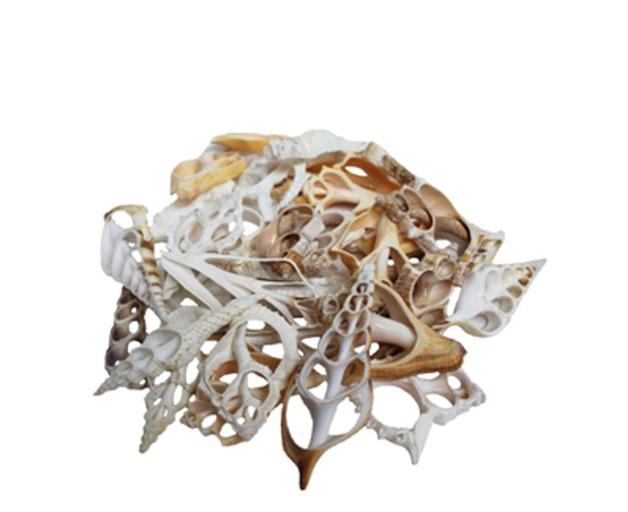 Large Assorted Sliced Shells