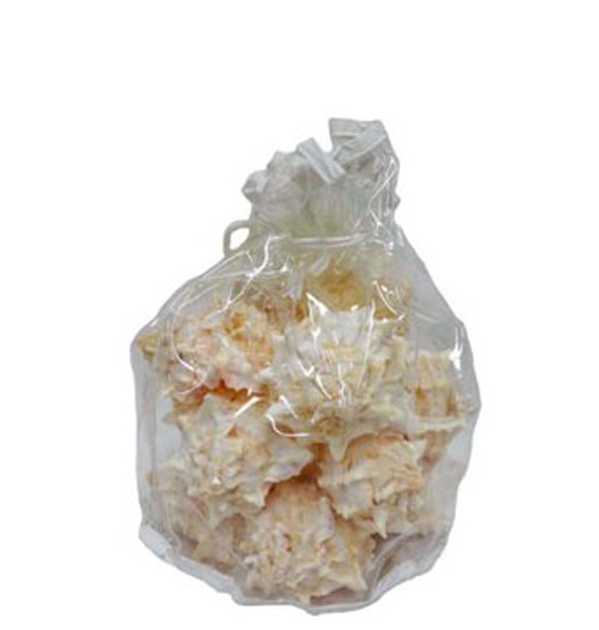 Pink Murex Seashell -12 pcs
