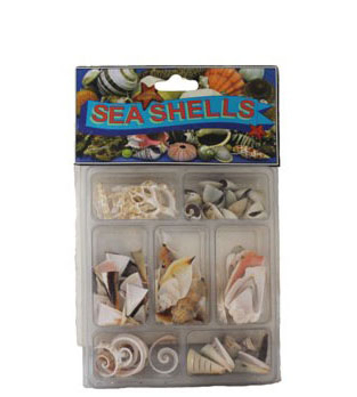 Slice Collection Seashells