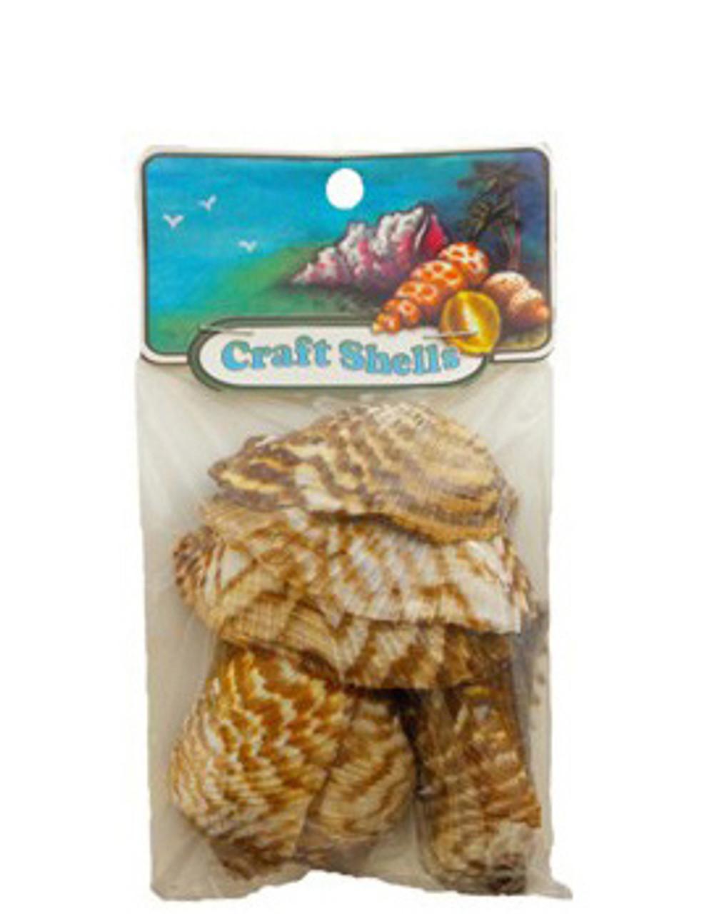 Turkey Wings - Craft Pack Seashells