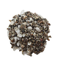 Extra Small Drilled Seashell Mix