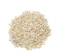 Pearlized Tiny Trochus - Kilo