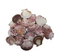 Pink Pecten Seashell