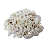 White Chula Seashells - Kilo
