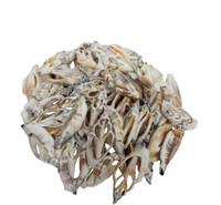 Brown Chula Slice Seashells