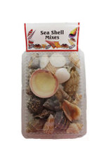 Large Shell/Double Sided Clear Shell Pack