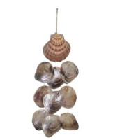 Lion's Paw Windchime w/Dyed Oyster Seashells