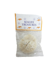 Mushroom Coral with Header