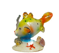 Ovula Ovum Fish